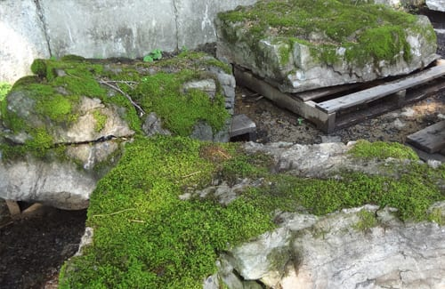 moss-rock-examples
