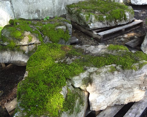 Another example of Moss Rock Pictures At Wicki Stone