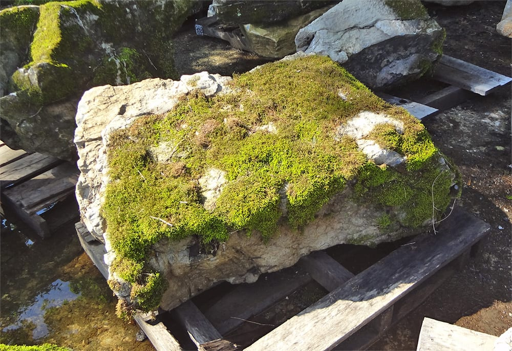 Photograph Of A Typical Moss Rock At Wicki Stone