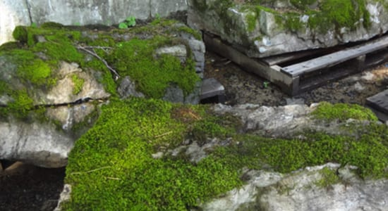 Moss Rock from Wicki Stone