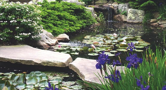Water Garden and pond landscape rocks